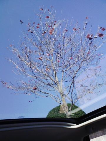 デュアリスの窓から「初冬」