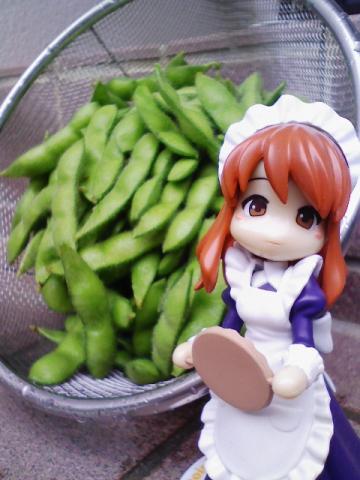 100均ダイソーで買った、枝豆の種ですが収穫の時が来ました