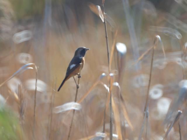 赤羽根緑地公園(日立市久慈町)で野鳥撮影